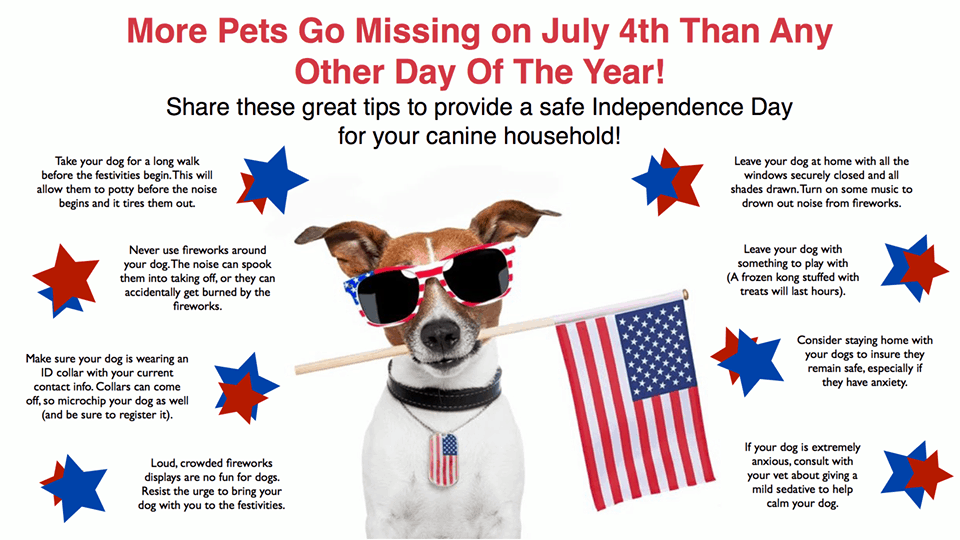Pet Safety During Fireworks